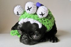 We're Obsessed With These Adorable Crocheted Hats for Dogs