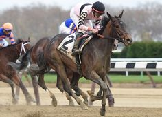 Lewis Bay(2013)Bernardini- Summer Raven By Summer Squall. 3x3 To Weekend Surprise, 4x5 To Northern Dancer. 3 Starts 2 Wins 1 Second. Won Demoiselle Stakes (G2). Turned 3 YO In 2016 And Still In Training.