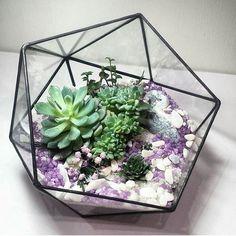 Modern Geometric Triangular Half Ball Glass Geometric Terrarium Tabletop Succulent Fern Moss Box Planter Flower Pot Bonsai Flower Pot