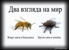 флай леди кто это?: 17 тыс изображений найдено в Яндекс.Картинках