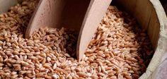 Con una historia milenaria, el farro es uno de los cereales que primero se cultivaron en la historia de la humanidad. Olvidado durante siglos en la alimentación de las diferentes civilizaciones, este grano completo se ha convertido en la actualidad en un superalimento dentro de la dieta mediterránea. Mediterranean Diet, Grains, Gnocchi, Food, Diets, Historia, Essen, Meals, Seeds