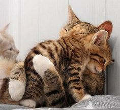 Give my a hug