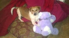 Henry 4 Month old Collie Mix, sweet boy! Rescue group pays all costs associated with fostering!