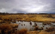 Culloden Battlefield, near Inverness