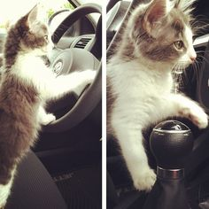 This kitten driving a car: | If You Instagram Anything, It Better Be Adorable