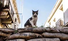 A feral cat sits on a sandbag barricade acting as a boundary for the green line, a UN-controlled buffer zone filled with abandoned structures, separating the divided Cypriot capital Nicosia on February 17, 2017.