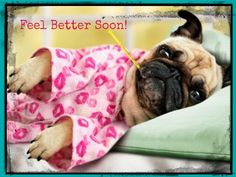 Get Well Card Pug Dog /& Teddy Bear with Plaster Blank Inside *Freepost*