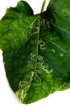 leaf doodles (mary jo hoffman)