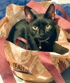 Our kitten Mojo decided to remind us that today was actually Caturday by doing what cats do best - napping! But she found a secret napping spot inside the @TandyLeather bag that we got for our purchases at Tandy Leather. It took us a while to find her and I was starting to actually panic.  This is the cute little face that popped up out the bag lol!  Mojo loves hanging around when we are creating our leather goods. Do you have pets in your studio or crafting space? . . . . . #tandyleather…