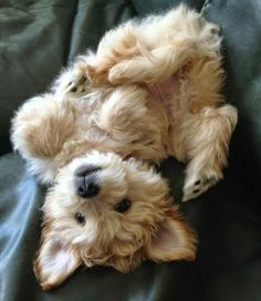 Top 10 Least Affectionate Dog Breeds