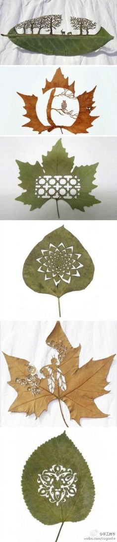 Lasercut leaf art leaves laser