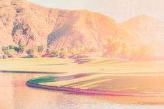 Palm Tree, California Wall Art, Palm, Springs, Palm Springs Desert, California Art Print, Palm Tree Photography, Joshua Tree
