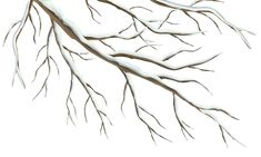 Winter Branch PNG Clipart Image