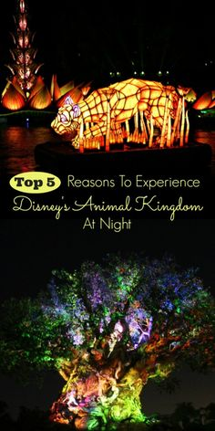 Planning a trip to Disney World? Don't just go to Animal Kingdom for the day. Stick around after the sun goes down and check out the amazing new attractions and show!