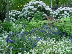 Stauden - die Längerkönner - Gartenzauber Woodland Garden, Herbs, Landscape, Green, Nature, Flowers, Plants, Inspiration, Beautiful Gardens