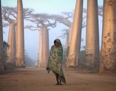 Ancient Balboa trees in Madagascar 2012 National Geographic Traveler Photo Contest - 2012 National Geographic Traveler Photo Contest: Gorgeous travel photos from around the world - NY Daily News