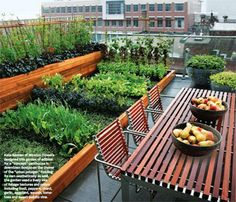 Rooftop Garden: Vegetable Garden Boxes adjacent to Dining Table