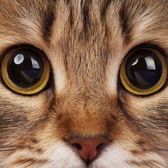 As 10 raças de gato mais amigáveis | eHow Brasil