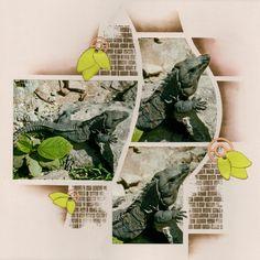 Iguane -