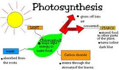 Photosynthesis is a process where plants and other organisms receive energy from the sun. Algae and plants use photosynthesis to turn the suns energy into organic molecules like glucose.
