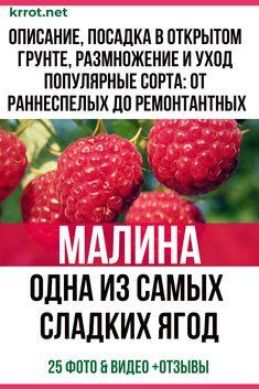 Raspberry, Strawberry, Small Farm, Garden Design, Berries, Home And Garden, Soda, Fruit, Flowers