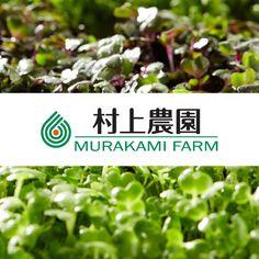 村上農園の公式サイトです。村上農園は、がん予防効果が期待される成分「スルフォラファン」を含むスプラウトなど、科学的な知見に基づく「高成分野菜」と呼ばれる野菜や、大人気の豆苗(とうみょう)などを生産。オンリーワンの商品にこだわって新しい農業に挑戦しています。