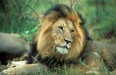 Why not booking for a holiday safari tour? We offer a tour to Kruger National Park for the African wildlife experience