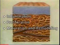 The Subcutaneous Tissue - YouTube