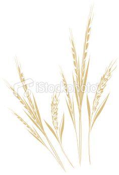 wheat Royalty Free Stock Vector Art Illustration