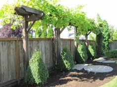 The wooden pergola is a good solution to add beauty to your garden. If you are not ready to spend thousands of dollars for building a cozy pergola then you may devise new strategies of trying out something different so that you can re Trellis Design, Grape Vine Trellis, Grape Vines, Vine Fence, Arbors Trellis, Wisteria Trellis, Privacy Trellis, Trellis On Fence, Wood Trellis