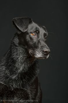 Intimate Portraits Reveal Amusing Facial Expressions of Skeptical Dogs - My Modern Met Skeptical Dogs, I Love Dogs, Cute Dogs, Silly Dogs, Animals And Pets, Cute Animals, Pet Photographer, Tier Fotos, Old Dogs