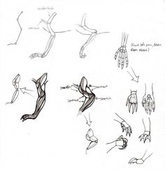 how to draw dragons: front leg by ~Kielrae on deviantART