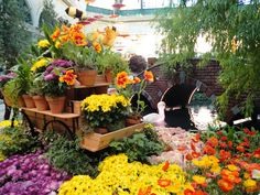 Spring 2012 Bellagio Conservatory