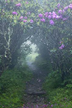 Un prodige de la nature - par Silvaris -