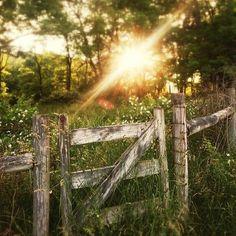 Ah, the early mornin' sun shining thru the trees...