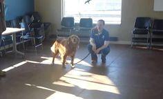 Le chien patiente au refuge. Lorsqu'il voit un visage qu'il n'a pas vu depuis 20 mois…