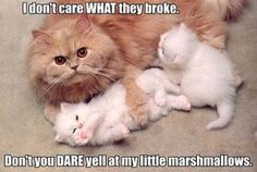 funny-cats