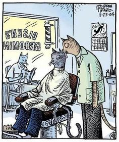 Cat Barber Grooming---Tuesday is $-Dollar Day...