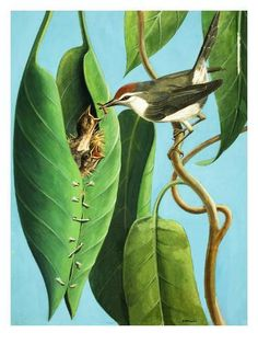 'I love watching our little Sunbirds building their nests but not as simple as this. Clever little birds. Weird Birds, Funny Birds, Beautiful Birds, Animals Beautiful, Bird Nest Craft, Bird Wall Art, Wild Creatures, Cute Animal Pictures, Colorful Birds