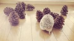 onegreenplanet:  Cute Hedgehog Tries to Make Friends With Pine Cones (VIDEO)