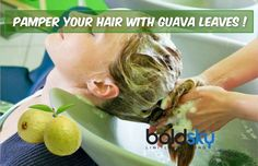 Pamper your hair with guava leaves! Take a look...