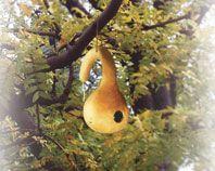 Een vogelhuisje van een pompoen maken | Dremel Europa