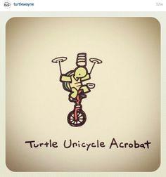 Cute Turtle Drawings, Turtle Sketch, Baby Animal Drawings, Cute Drawings, Turtle Time, Tiny Turtle, Cute Turtles, Baby Turtles, Kawaii Turtle
