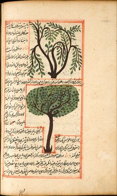15th-16th Century Botanical Book Illustration
