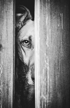 """Door Keeper - Elke Vogelsang is a German photographer whose muse became her dogs when she rescued her first, Noddles. """"In my family, all dogs were rescue dogs,"""" Vogelsang explains. """"So to me, it was always clear that I would get my dog from … Rescue Dogs, Pet Dogs, Dogs And Puppies, Dog Cat, Corgi Puppies, Weiner Dogs, Boxer Dogs, Doggies, Dog Photos"""