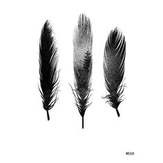 Forest feather foto. Illustration. poster. Graphic design. muui.dk