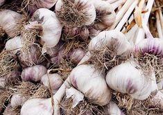 Valkosipulin kasvatus | Meillä kotona Garlic, Vegetables, Vegetable Recipes, Veggies