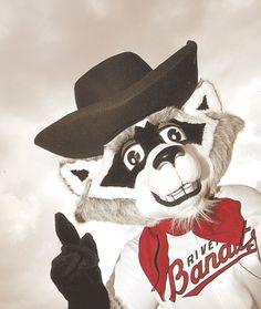 Rascal the Raccoon, Quad City River Bandits mascot; Midwest League