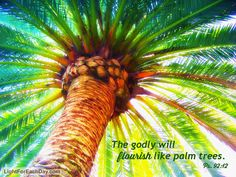 https://flic.kr/p/o6QXpj | The godly will flourish like palm trees. Psalm 92:12 | The godly will flourish like palm trees     and grow strong like the cedars of Lebanon. For they are transplanted to the Lord's own house.  They flourish in the courts of our God.    Ps. 92:12-13 www.lightforeachday.com