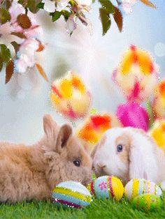 Spring Images, Spring Pictures, Easter Pictures, Gif Pictures, Holiday Gif, Holiday Wishes, Easter Art, Easter Bunny, Gifs